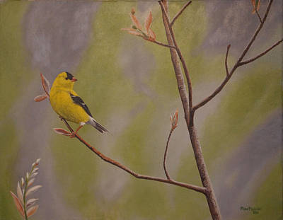 Birds Painting - Gold Finch by Ron Plaizier