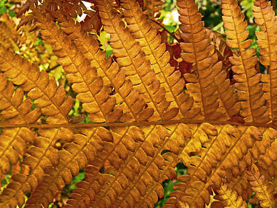Gold Leaf Print by William Fields