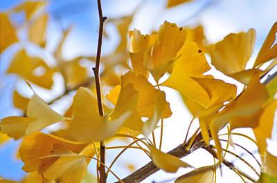 Golden Autumn Print by Kaye Menner