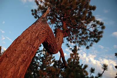 Sierra Photograph - Golden Breeze by LeeAnn McLaneGoetz McLaneGoetzStudioLLCcom