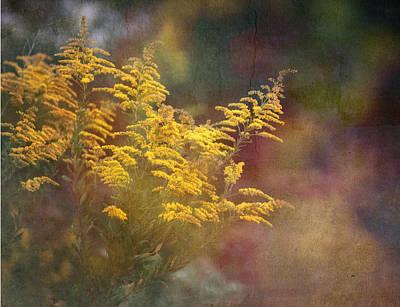 Photograph - Golden by Brenda Bryant