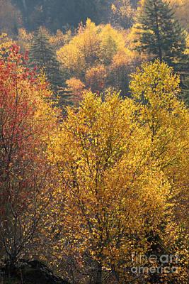 Smokey Mountain Drive Photograph - Golden Days by Gary L Suddath