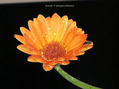 Golden Droplets Print by Sonali Gangane