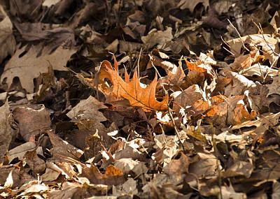 Stairs Photograph - Golden Leaf Hanging On To Fall by LeeAnn McLaneGoetz McLaneGoetzStudioLLCcom
