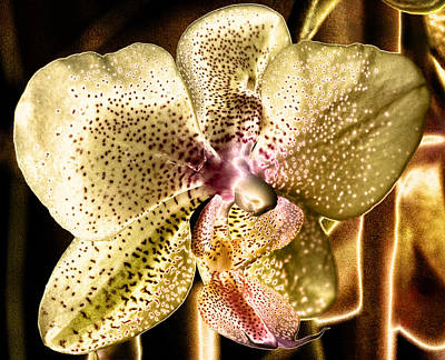 Golden Orchid Print by Barbara Middleton