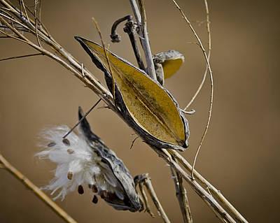 Swallow Photograph - Golden Phases Of Life by LeeAnn McLaneGoetz McLaneGoetzStudioLLCcom