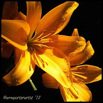 Lilies Photograph - Golden Lilies At Twilight by Anna Porter