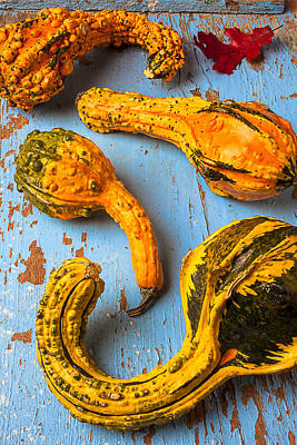 Abundance Photograph - Gourds On Wooden Blue Board by Garry Gay
