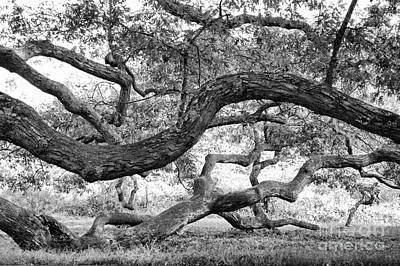 Granby Oak Print by HD Connelly
