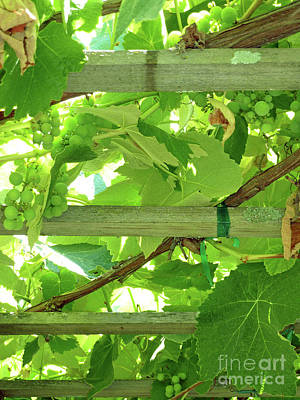 Grape Arbor Print by Methune Hively