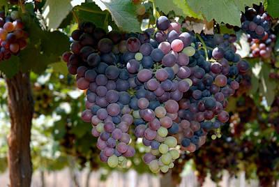 Grapes Bunch Print by Johnson Moya