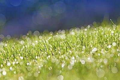 Grass, Close-up Print by Tony Cordoza