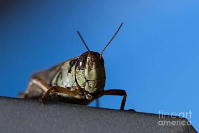 Cicada Photograph - Grass Hopper Pose by Darcy Michaelchuk
