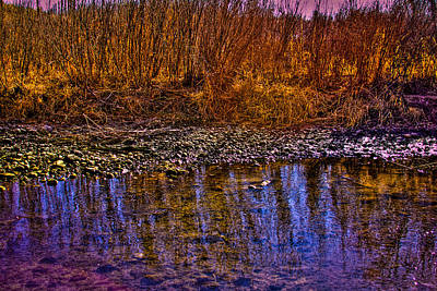 Grass Reflections Print by David Patterson
