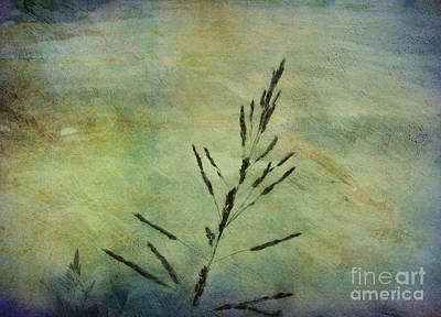 Grass Stem Print by Judi Bagwell