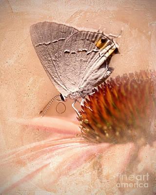 Gray Hairstreak Butterfly Print by Betty LaRue