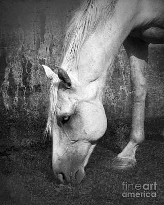 Quarter Horse Digital Art - Grazing In Black And White by Betty LaRue