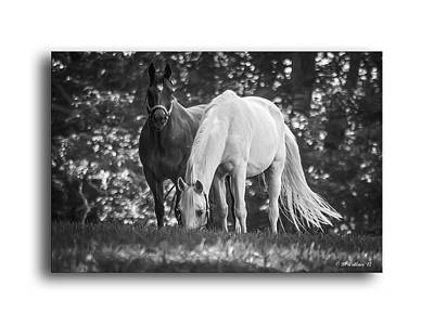 Grazing In Black And White Print by Brian Wallace
