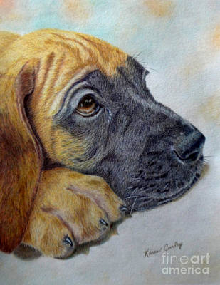 Colored Pencil Painting - Great Dane Puppy by Karen Curley