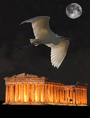 Parthenon Mixed Media - Great Egret Parthenon Athens by Eric Kempson