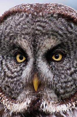 Kamloops Photograph - Great Gray Owl by Chad Graham