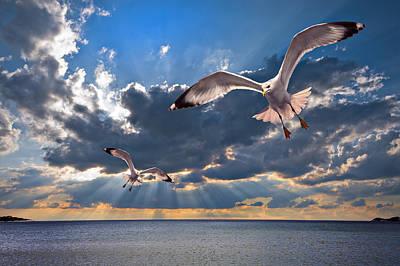 Headlands Photograph - Greek Gulls With Sunbeams by Meirion Matthias