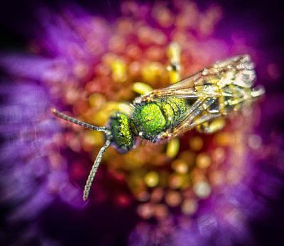 Green Bee Print by Vicki Jauron