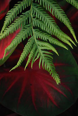 Green Fern Black And Red Leaf Print by Jennifer Holcombe