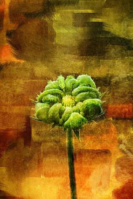 Gerber Daisy Photograph - Green Gerbera Daisy Grunge by Tracie Kaska