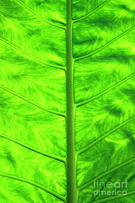Green Leaf Print by Sami Sarkis