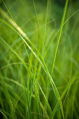 Corporate Art Photograph - Green Prairie Grass by Steve Gadomski