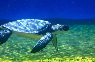 Hawaiian Honu Photograph - Green Sea Turtle by Karon Melillo DeVega