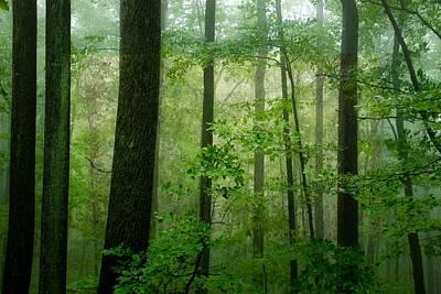 Black Photograph - Greener Than Green by Trish Tritz