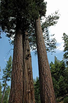 Trees Photograph - Growing Together As One by LeeAnn McLaneGoetz McLaneGoetzStudioLLCcom