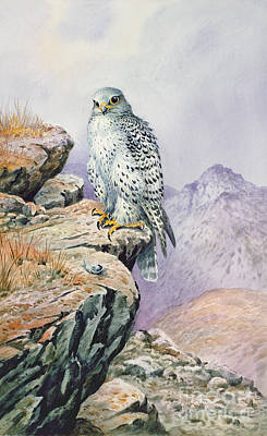 Falcon Painting - Gyrfalcon by Carl Donner