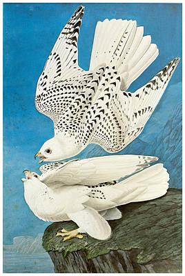 Gyrfalcon Print by John James Audubon