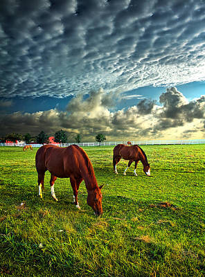 Hailey's Horses Print by Phil Koch