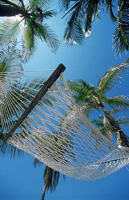Hammock And Palm Tree, Great Barrier Print by Ron Watts