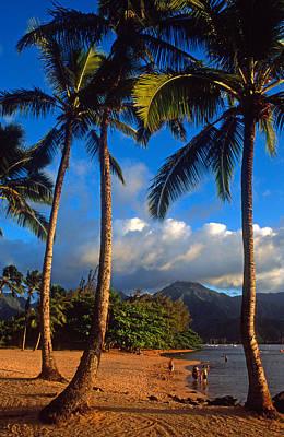 Hanalei Bay Palms Print by Kathy Yates