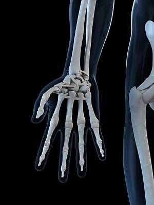 X-ray Image Digital Art - Hand Bones, Artwork by Sciepro