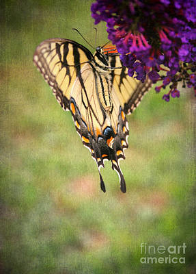 Fluttering Photograph - Hanging On by Darren Fisher