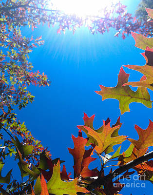 Photograph - Happy Autumn by CML Brown
