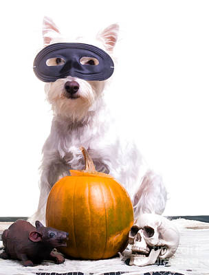 Cute Puppy Photograph - Happy Halloween Dog by Edward Fielding