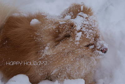 Pup Digital Art - Happy Holidays Christmas Card by Joanne Smoley