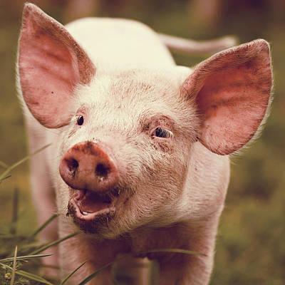 Happy Little Piglet Print by Liesel Conrad