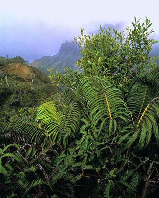 Cibotium Splendens Photograph - Hapu'u Ferns by G. Brad Lewis