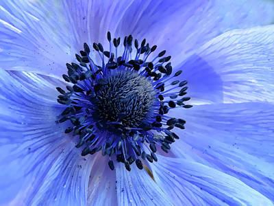 Windflower Photograph - Harmony Blue by Mim Eisenberg