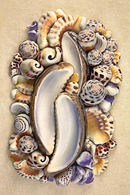 Seashell Photograph - Hawaii Opus 16 by Carol Zee