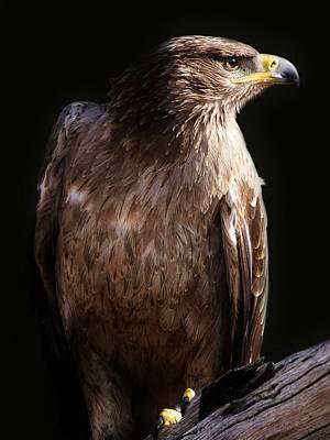 Photograph - Hawk by Paulette Thomas