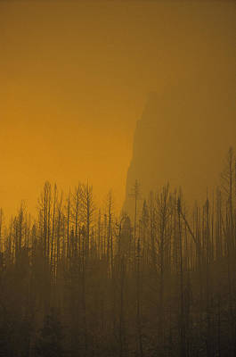 Haze Obscures Charred Pines Print by Michael S. Quinton